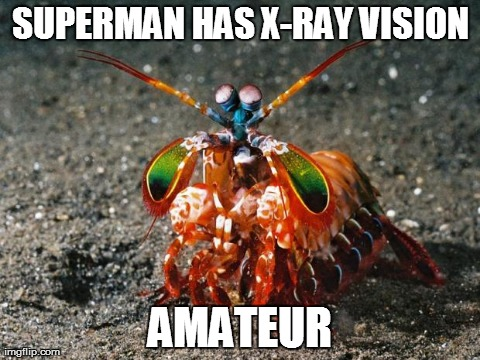 ... AMATEUR | image tagged in mantis shrimp | made w/ Imgflip meme maker