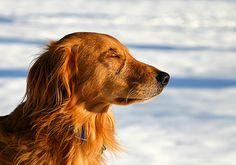 43 Best Compassion images | Compassion, Self compassion ...