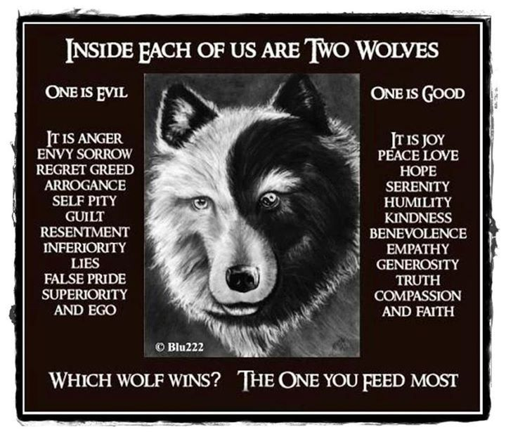 Which One Do You Choose? | Wolf quotes, Two wolves, Native ...