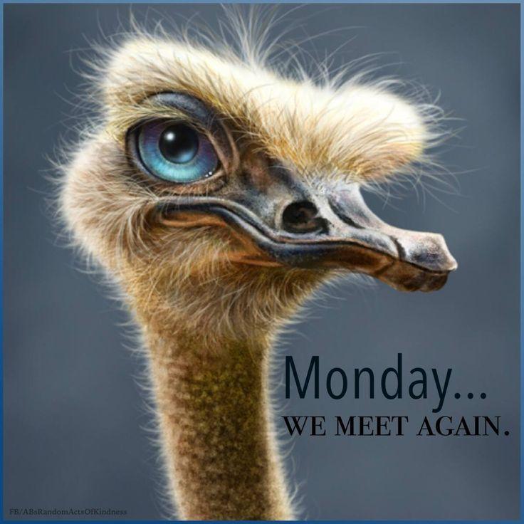 65 best I Hate Mondays! images on Pinterest | So funny ...