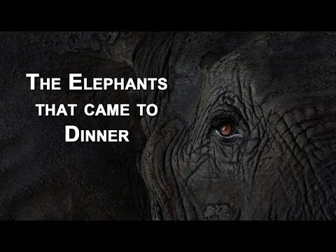 The Elephants in the Room: Watch a Herd Walk through a ...