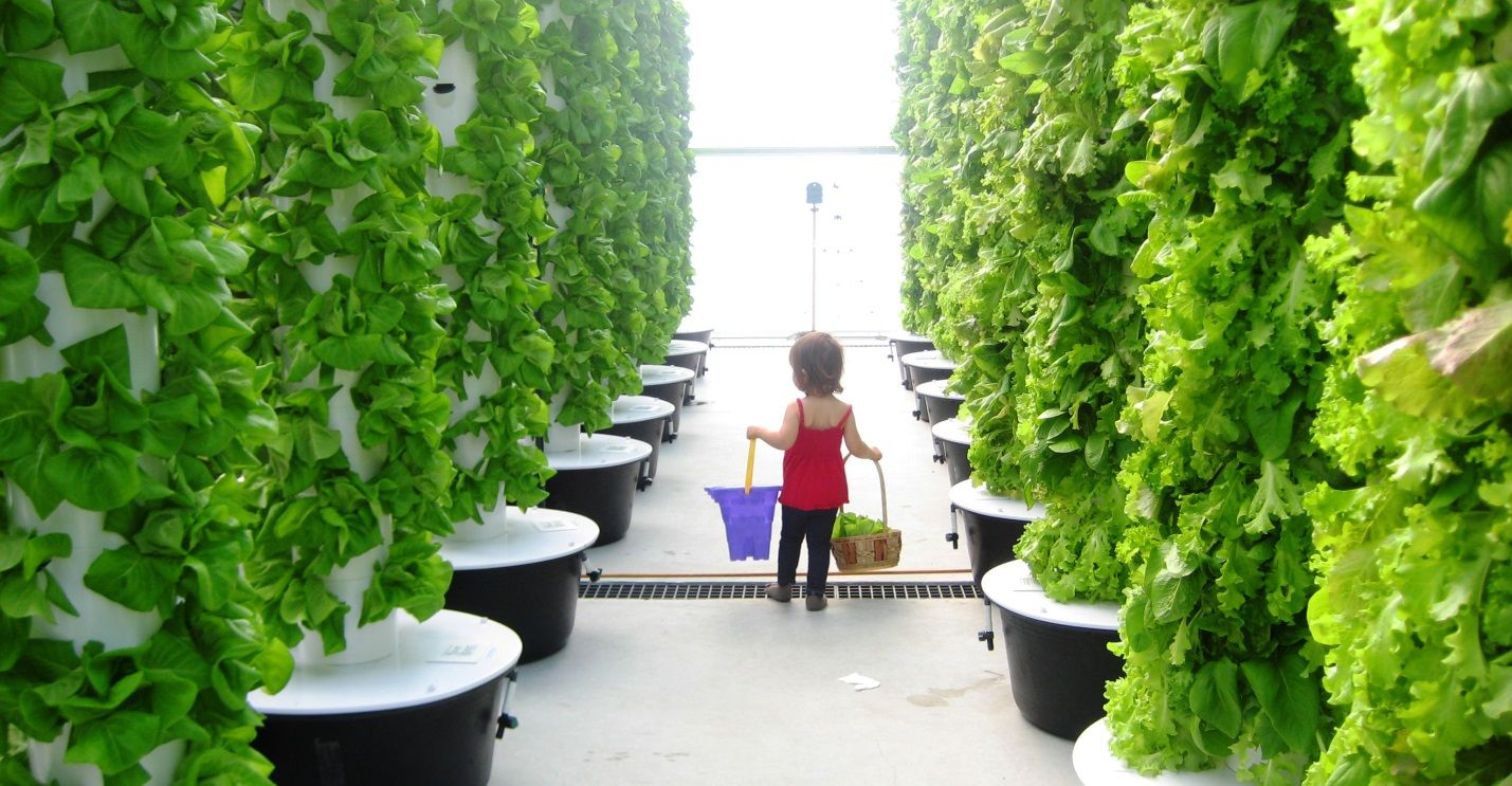Local Tower Garden Farmer Produces Aeroponic Food for Disney, Emeril's, and other Fine Orlando ...