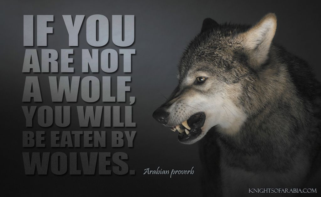 """If you are not a wolf, you will be eaten by wolves ..."