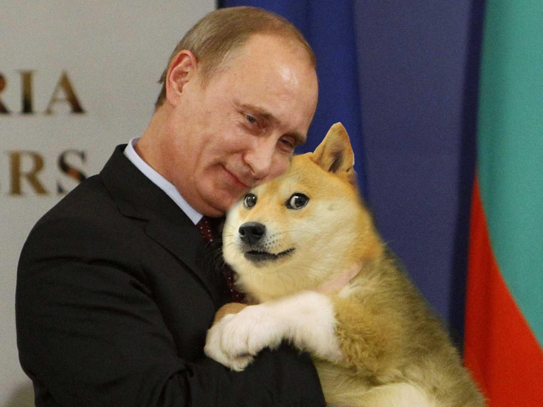 Putin loves doge | Doge meme, Russian memes, Top memes