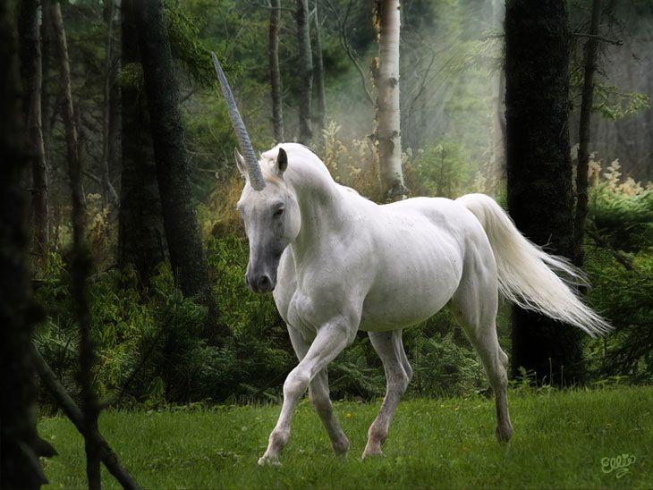 realistic unicorn | Inspiring Photoshop Art (photo ...