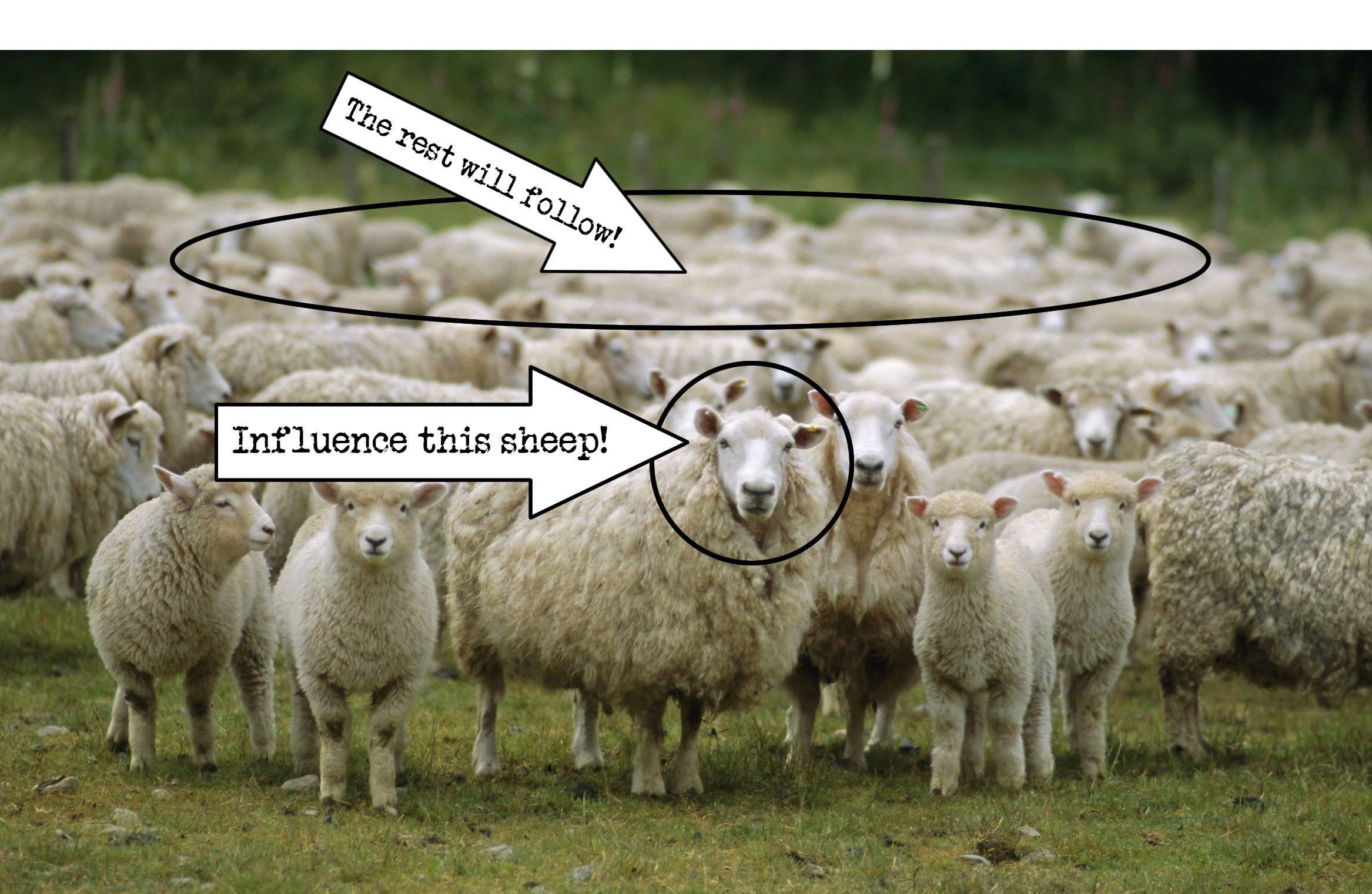 Sheeplism: Followers and Leaders http://www.tjmarino.com ...