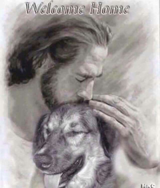 Welcome home... Pic of dog with Jesus   Dogs, Dog quotes ...