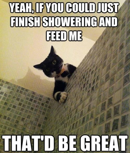 Office Cat | Funny cat pictures, Funny animals, Funny ...