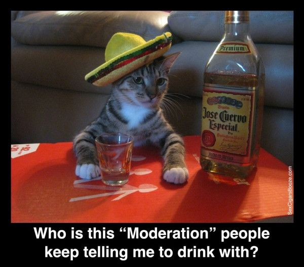 """Who is this """"Moderation"""" people keep telling me to drink ..."""