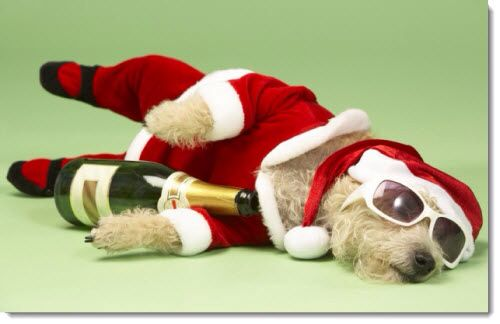Drunk doggie | Xmas pictures | Funny christmas pictures ...