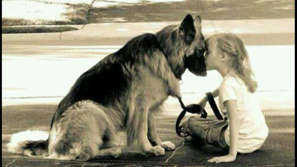"""""""If there are no dogs in heaven, then when I die I want to ..."""
