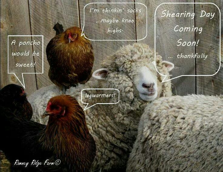 Pin by Angela Raby on sheep | Yarn humor, Knitting humor, Knitted wit