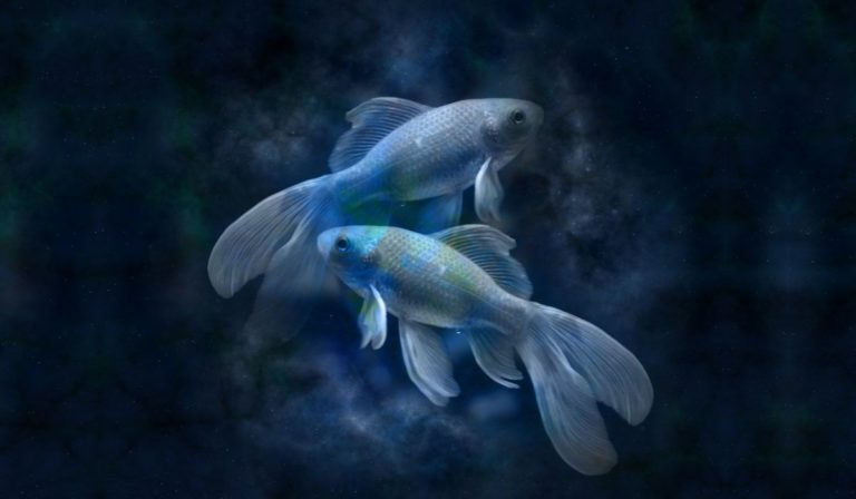 Pisces Qualities, Positive and Negative Traits