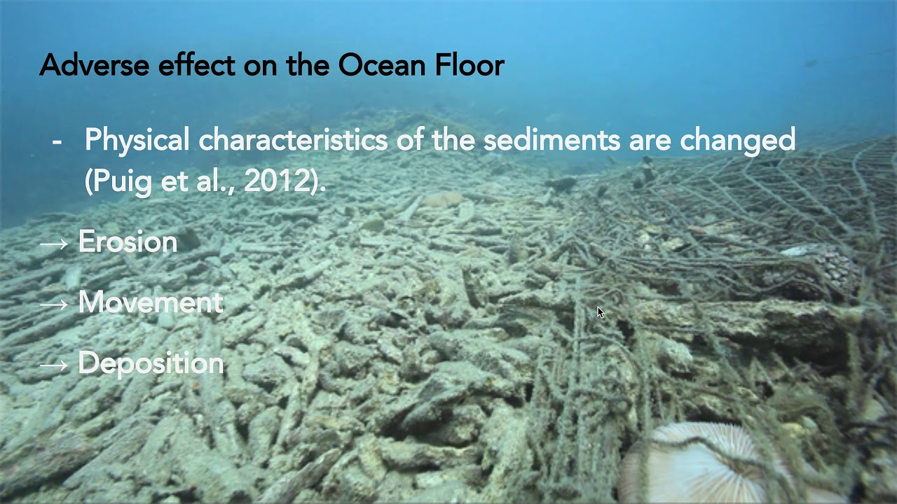 Impacts of Trawling and Bycatch - YouTube