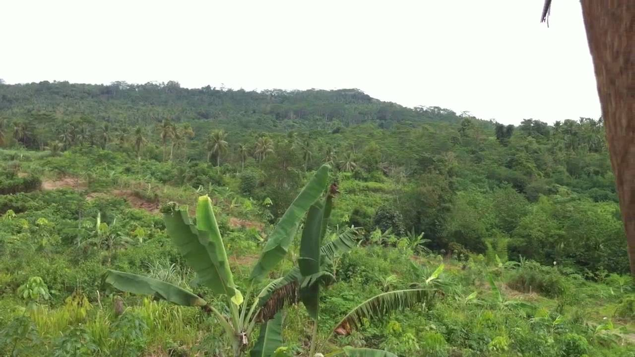 Rubber Plantation in Mindanao Philippines - YouTube