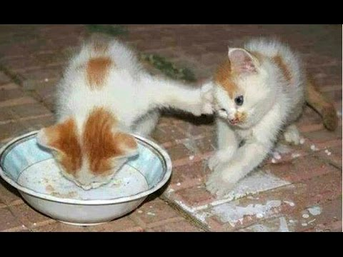 Funny Cats And Kittens Who Don't Want To Share Their Food ...