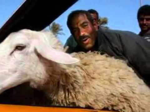 AC DC Dirty Deeds Done with Sheep......FUNNY. - YouTube