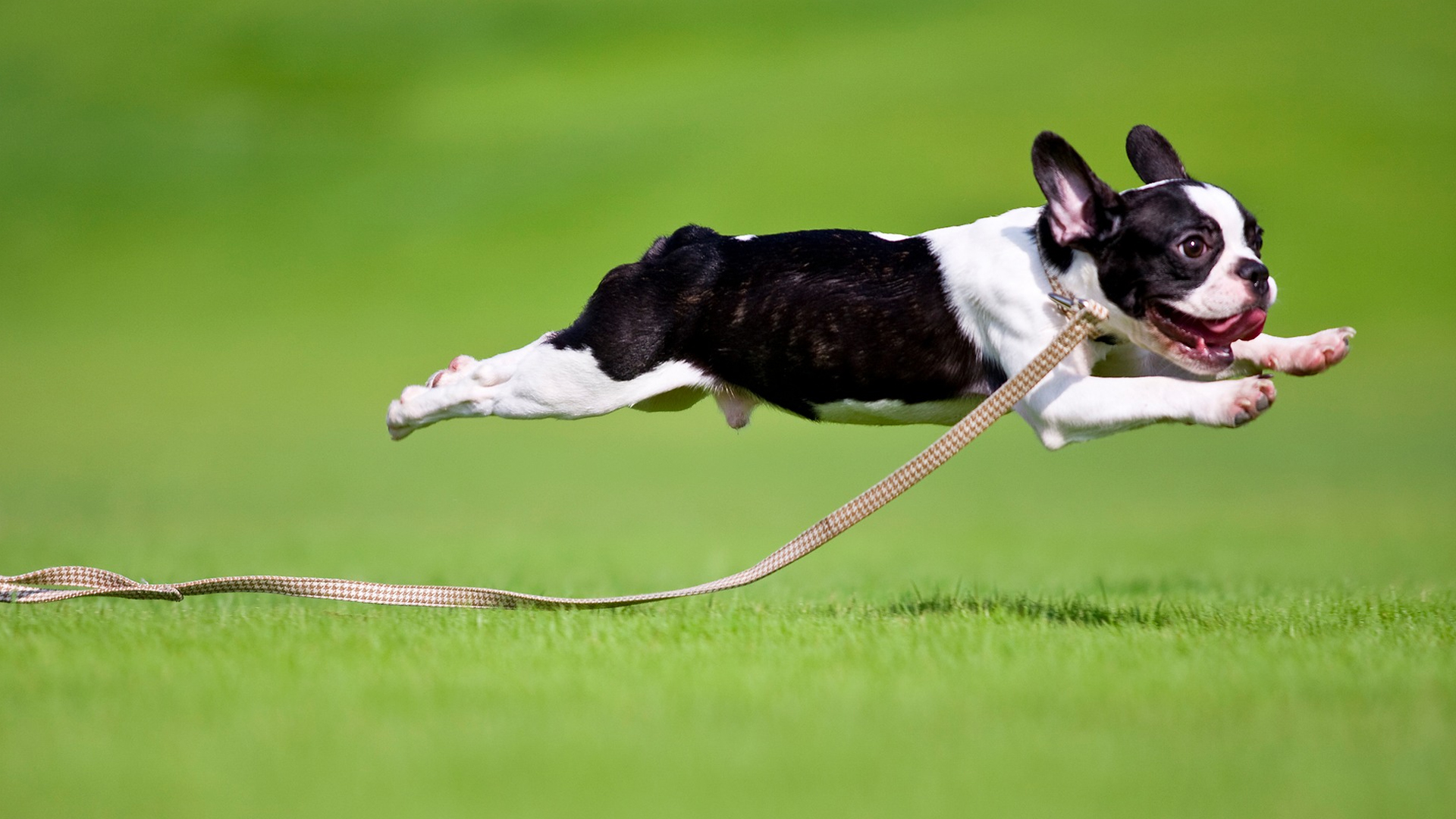 Does Your Dog Ever Start Running Around Like Crazy? It's ...