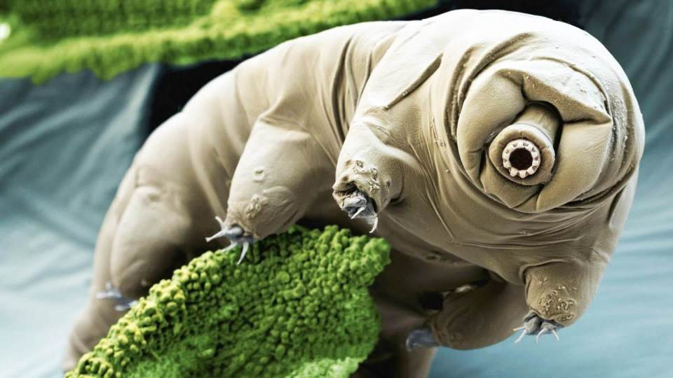 Tardigrade DNA Added to Human Cells Could Help Us Survive on Mars, Scientist Says…