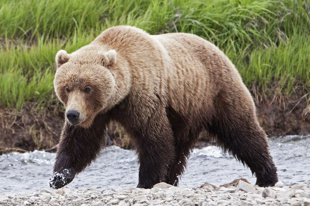 Man fights off grizzly bear after remembering his grandma ...