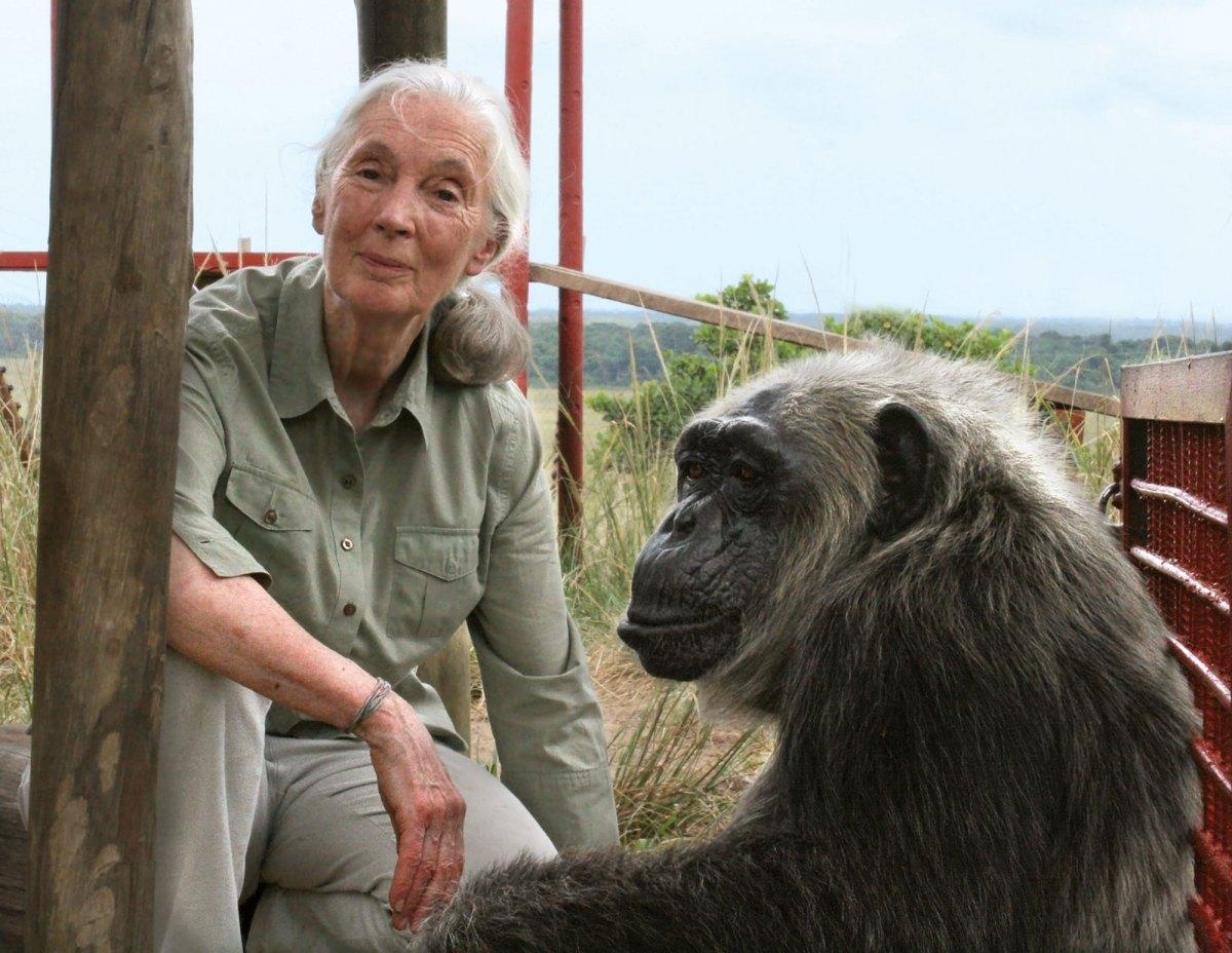 Jane Goodall Wins the Templeton Prize - SCIFI.radio - Your ...