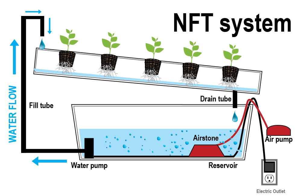 Nutrient Film Technique - Indoor Organic Growing System ...