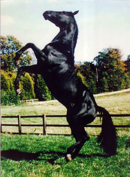 How Black Beauty Gave Animals a Voice - ilovehorses.net