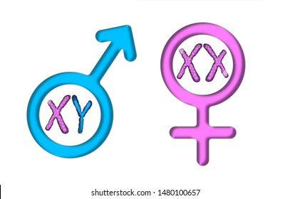 Male Female Chromosomes Images, Stock Photos & Vectors ...