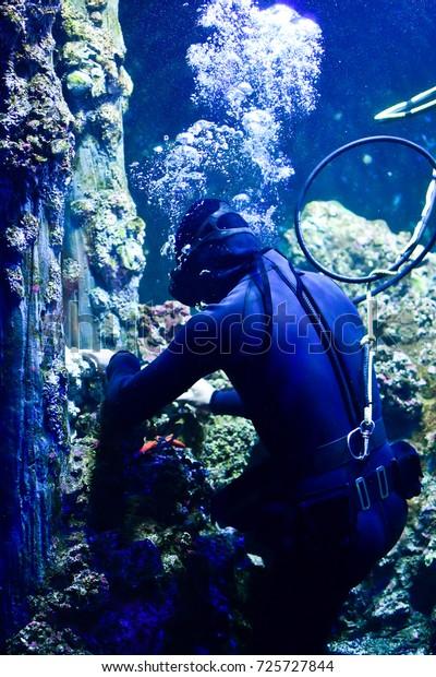 Diver Doing Maintenance Work Aquarium Stock Photo (Edit ...