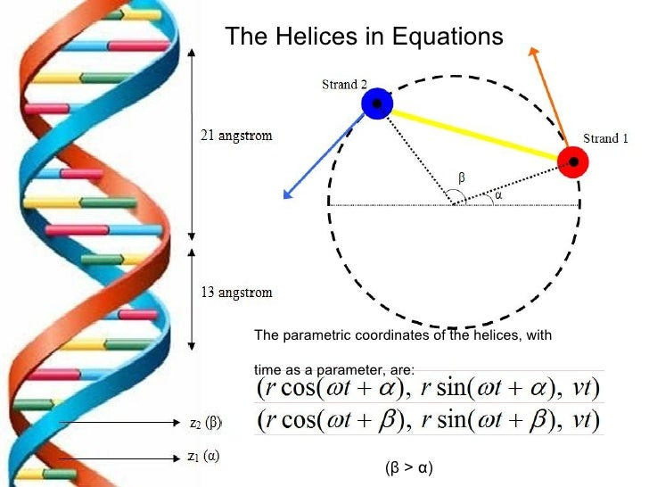 The DNA Double Helix