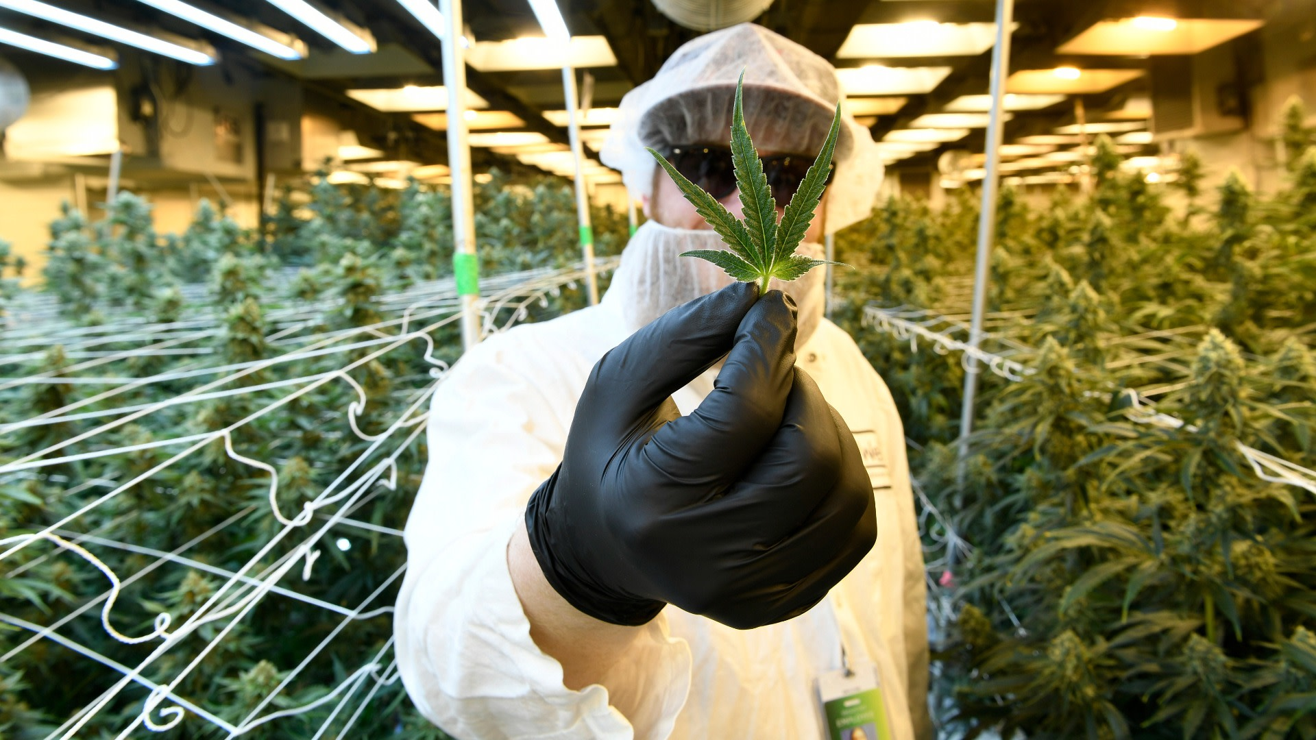 Scientists discover cannabis compound that is 30 TIMES more potent than THC…