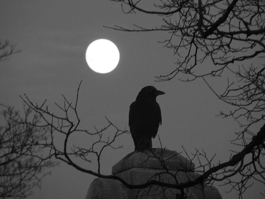 Night Crow And The Full Moon Photograph by Gothicrow Images