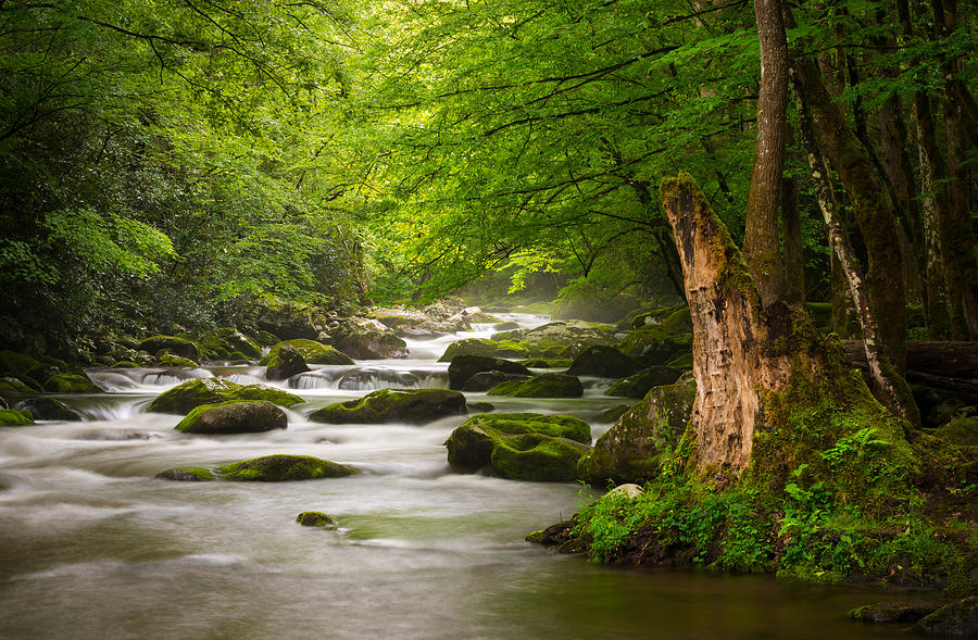 Smoky Mountains Solitude - Great Smoky Mountains National ...