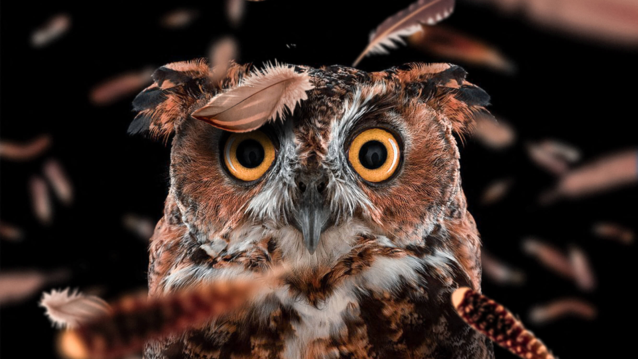 Curious Owl, HD Birds, 4k Wallpapers, Images, Backgrounds ...