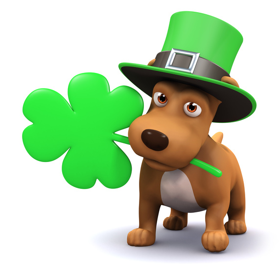 5 Fun Ways to Spend St. Patrick's Day With Your Dog | HuffPost