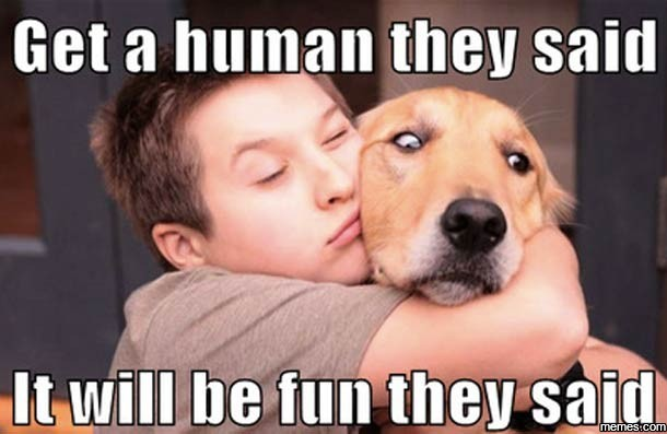 Laugh Alert: 2016's Top Dog Memes That Were Total Favs ...