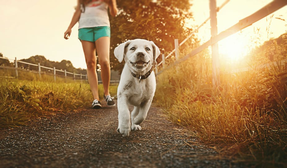 Walking a dog won't make your child fitter, but it can give them a healthier start