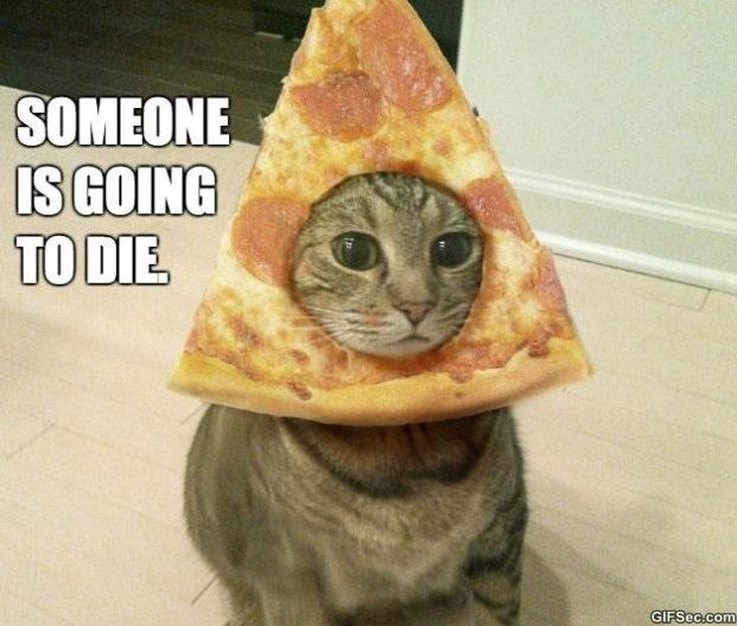 10 Times Your Cat Was Totally Over You | Cuteness