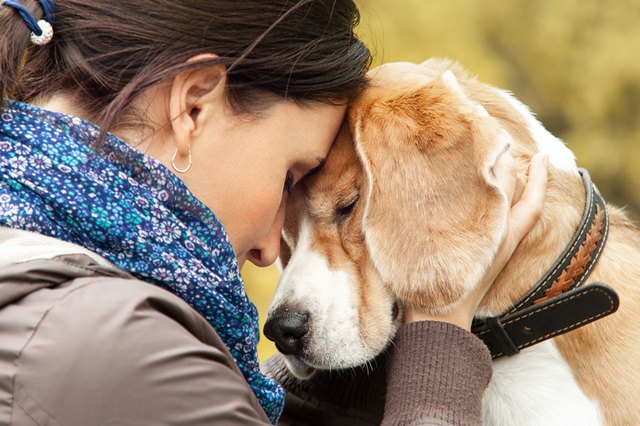 Do Dogs Know When a Person is Grieving?   Cuteness