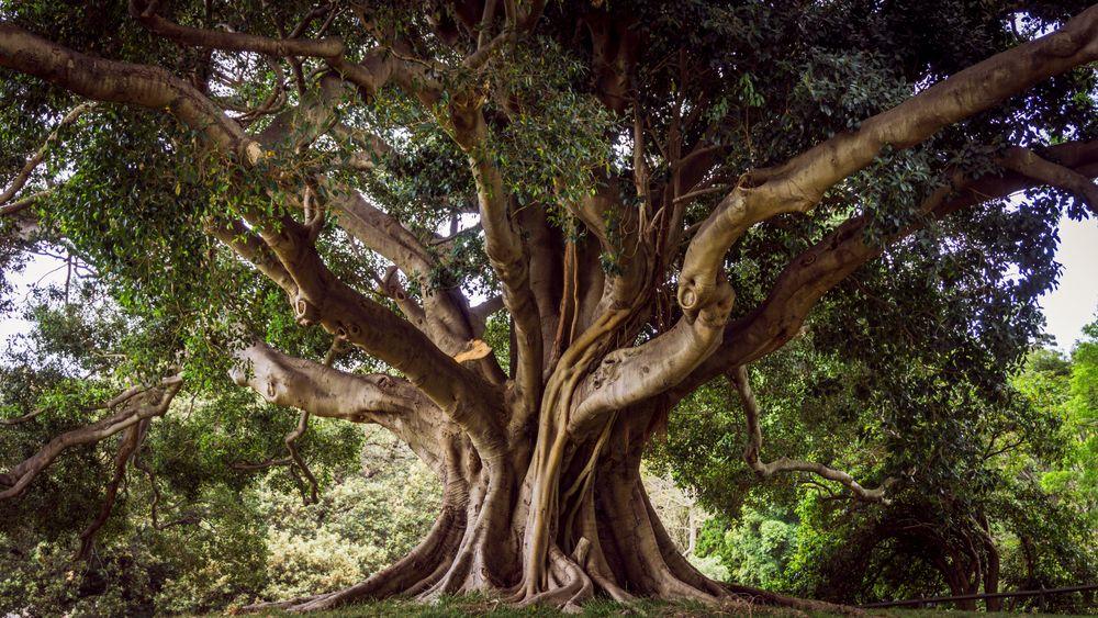 Baum des Lebens ~ Sydney Foto & Bild | australia, park ...