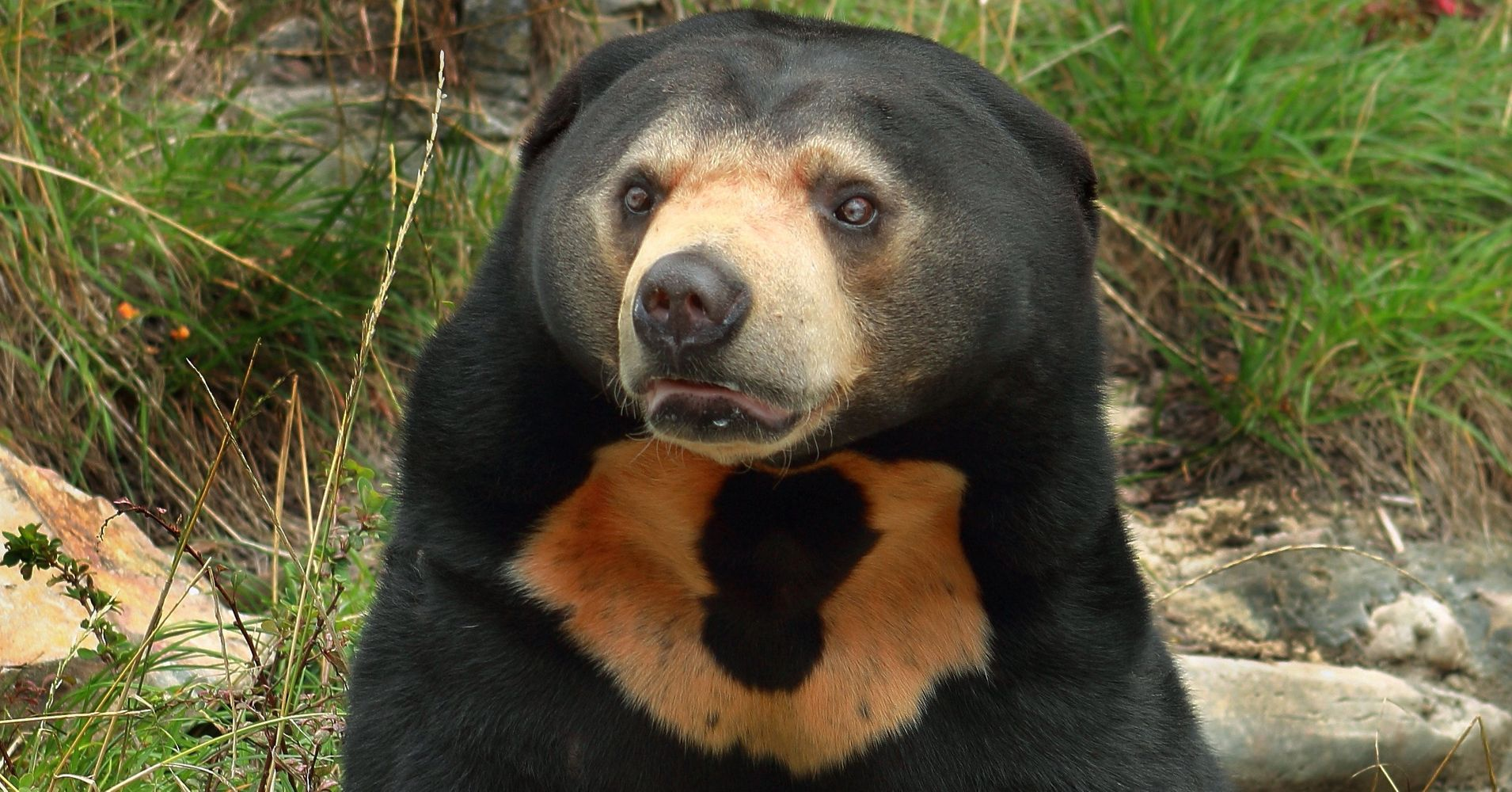 Sun Bears Can Mimic Facial Expressions The Same Way Humans ...