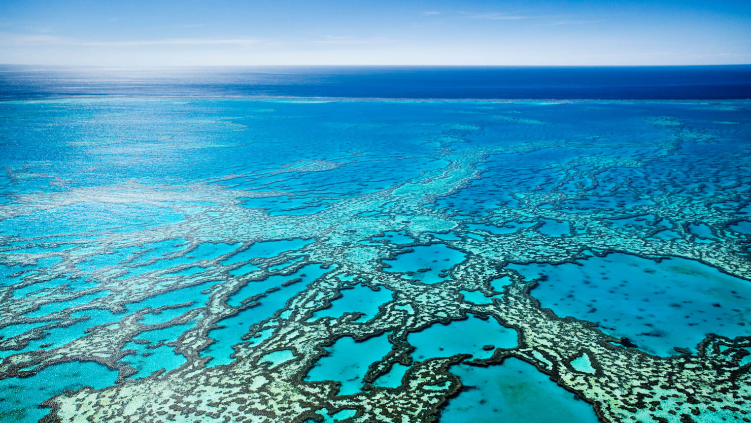 To Save the Great Barrier Reef, Move It