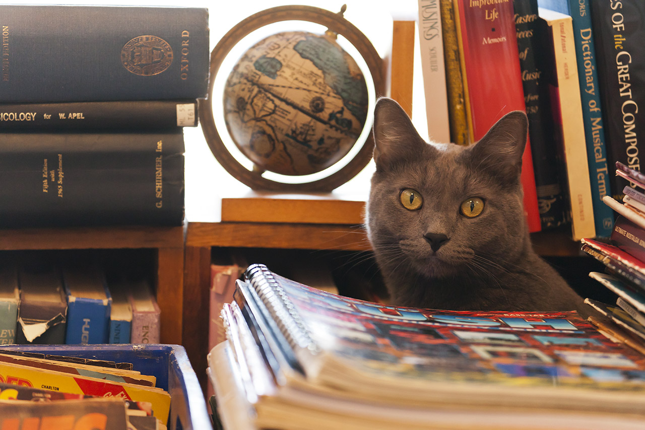 My Cat Likes to Work in Bookstores!