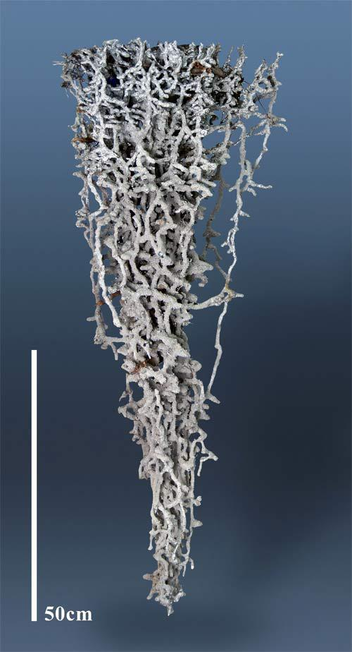 Aluminum cast of a fire ant colony.