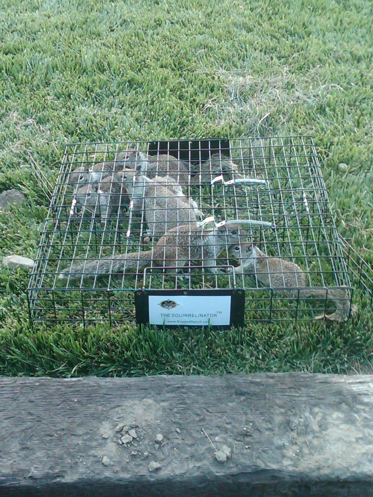 RUGGED RANCH SQUIRRELINATOR LIVE MULTI CATCH SQUIRREL TRAP ...