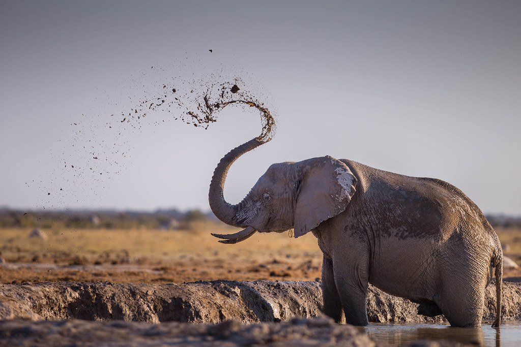 Aesthetic elephant. Nxai Pan NP. Botswana | M&B | Flickr