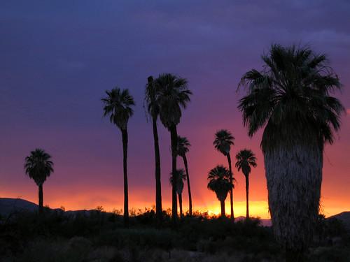 Oasis of Mara | NPS/Robb Hannawacker | Joshua Tree ...