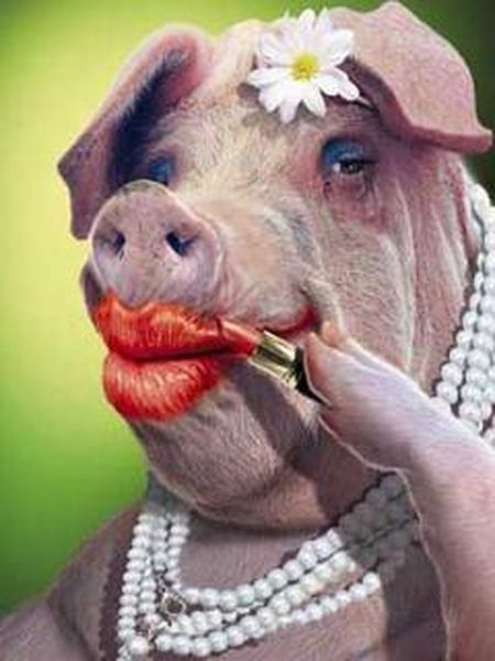 lipstick-on-a-pig | Massively Overpowered