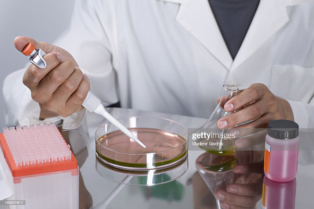 A Research Scientist Using A Pipette On A Petri Dish Stock ...