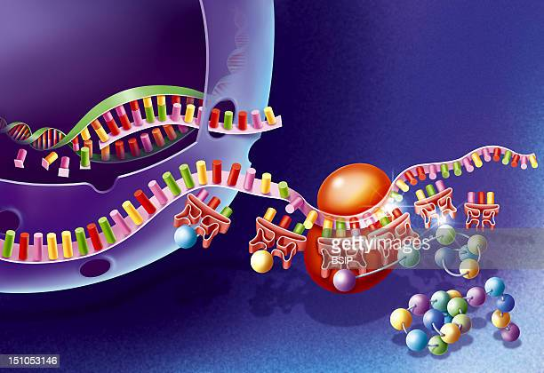 Mrna Stock Pictures, Royalty-free Photos & Images - Getty ...